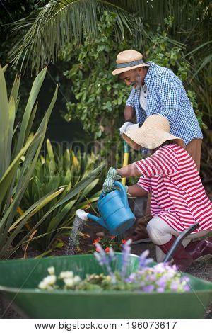 Senior couple watering plant while gardening in yard