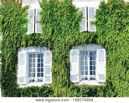 White old house covered with leaves of wild grapes in France