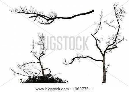 Dry tree branch isolated on white background with clipping path For web design or graphic art image