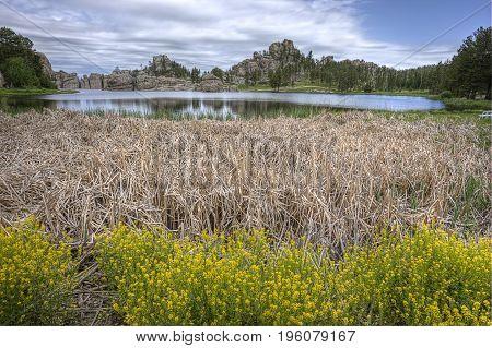 Plants and dry grass by Sylvan Lake near Custer South Dakota.
