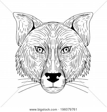 Illustration of a Fox Head Front view done in hand sketch Drawing style.