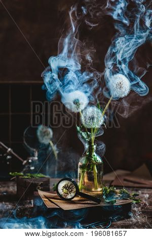 Botanical still life with scientist's workplace, dandelions in a glass bottle and a blue smoke on a dark background