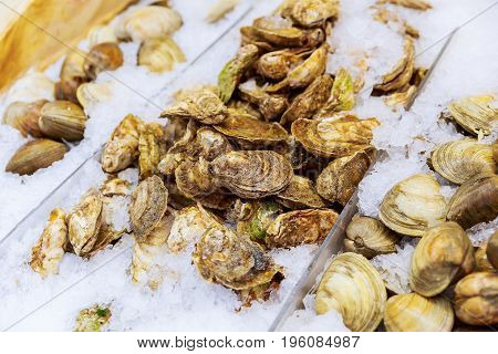 Pile Of Fresh Seafood Clams On Ice Close Up Healthy Eating.