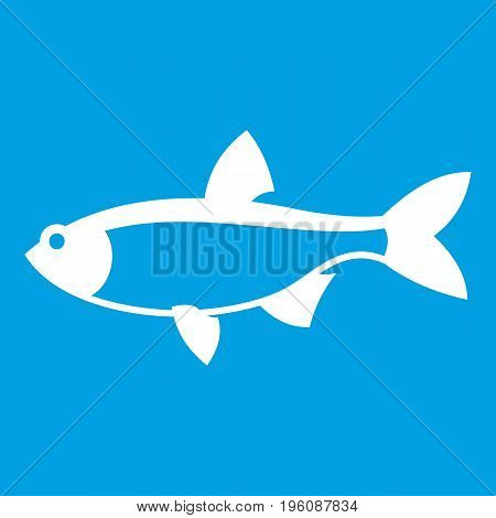 Rudd fish icon white isolated on blue background vector illustration