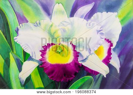 Painting watercolor on paper original realistic white color of orchid flowers and green leaves in nature winter season and blue background.