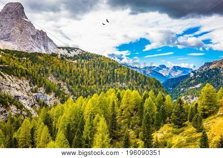 The shores of the glacial lake in the Dolomites. On the mountain slopes there is a coniferous forest