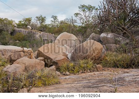 Landscape Of The Brazilian Biome Caatinga And Its Typical Vegetation