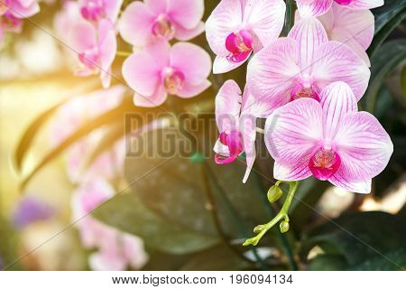 Beautiful orchid flower in the garden at winter or spring day for postcard, beauty and agriculture idea concept design. Orchids are export business products of Thailand that make a lot of money.