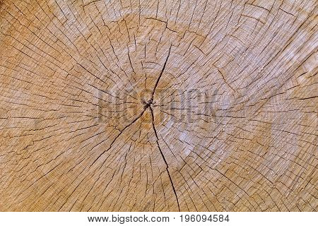 The center cracks of an oak log section show.