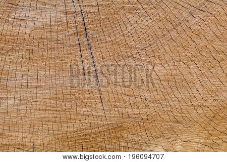 The half section of the old oak log shows radials.