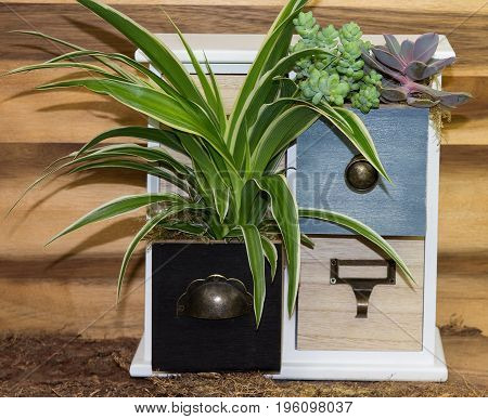 Houseplant Growing In Cubby