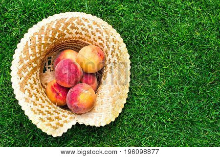 Apricots and peaches in a straw hat. Fruit on green fresh grass in the garden.