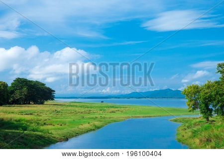 Sri Lanka Lake, Sri lanka landscape, Trees on water, Trees on lake
