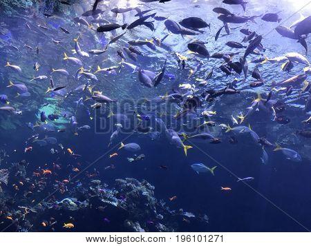 A beautiful tropical fish aquarium at the California Academy of Sciences in San Francisco, CA.
