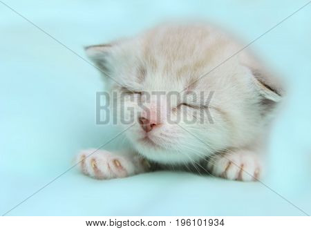 Cute white little Kitten Sleeping on the bed.