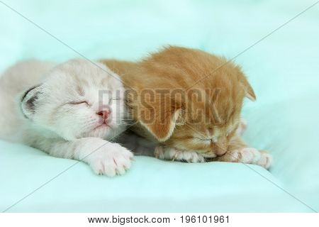Two little kittens sleeping on the bed.