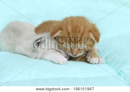 Two little kitten sleeping on the bed.