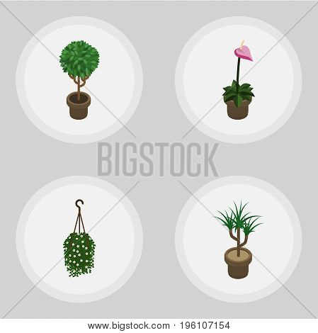 Isometric Flower Set Of Grower, Blossom, Tree And Other Vector Objects
