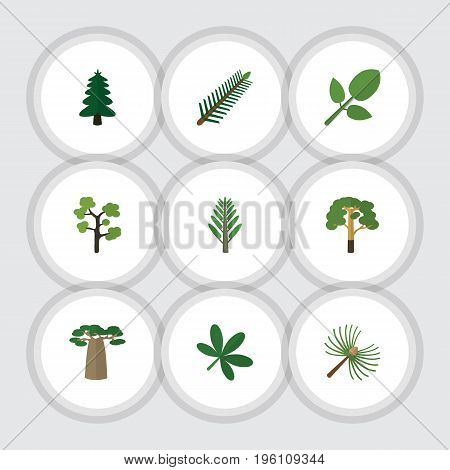 Flat Icon Bio Set Of Spruce Leaves, Rosemary, Wood And Other Vector Objects