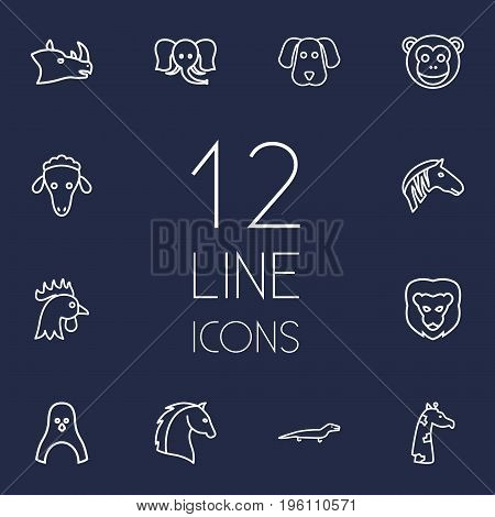 Set Of 12 Animal Outline Icons Set