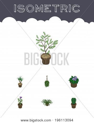 Isometric Houseplant Set Of Blossom, Peyote, Flower And Other Vector Objects