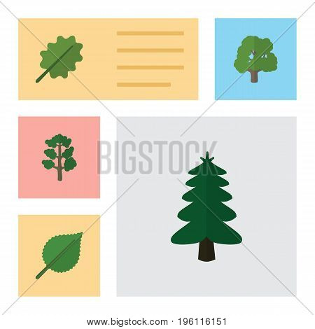 Flat Icon Natural Set Of Linden, Forest, Park And Other Vector Objects