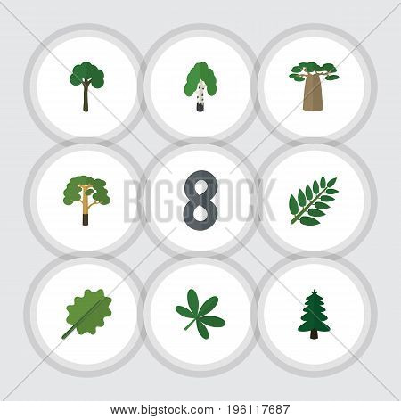 Flat Icon Ecology Set Of Alder, Park, Wood And Other Vector Objects