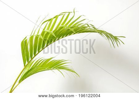 Green palm leaf and shadow isolate on white background