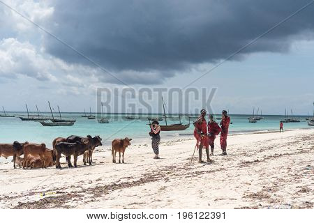 Zanzibar, Tanzania - July 15, 2016: Cows and locals of zanzibar next to the ocean, waves and dark clouds behind them