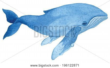 Humpback whale - hand drawn watercolor vector illustration