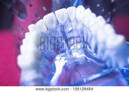 Dentists Dental Tooth Model