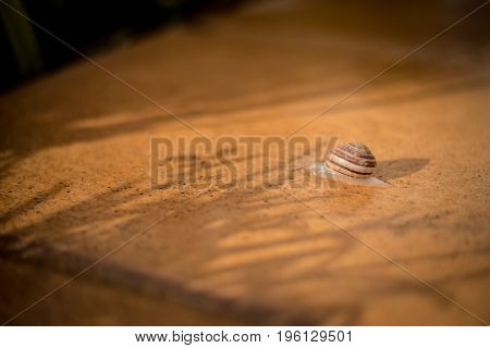 Garden Snail On A Stones Deck And A Shadows From Herbs