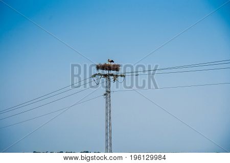 Stork In The Nest On A Power Line Near A Road