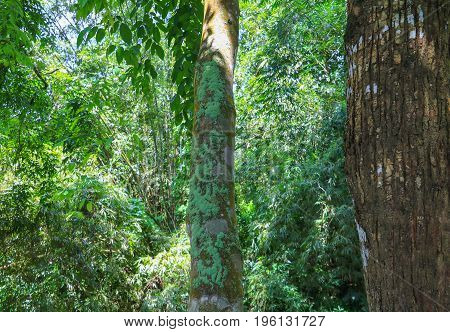 big tree forest tropical with branch and green woodland leaves background in nature