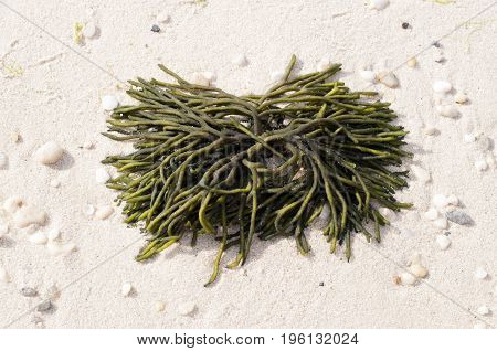 this is an image of seaweed that came in with the tide