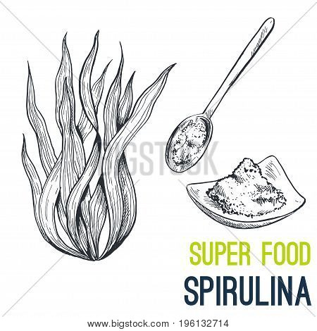 Spirulina. Super food hand drawn sketch vector illustration.