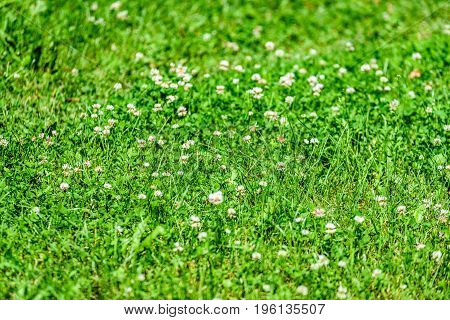 Sunny Meadow With Flowers And Green Grass