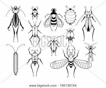 Different insects with patterns on wings. Butterflies and bugs set. Vector biology illustration set of insects with wings black line