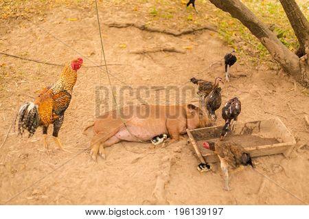 Animal Growing On Don Det