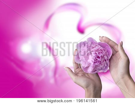 Female hands with a pion on a pink background