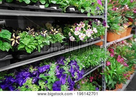 Different plants on shelves in store