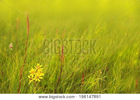 Floral background of meadow plants and flowers in soft green and yellow tones, soft selective focus
