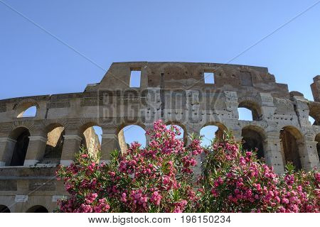 ROME ITALY - 22 JUNE 2017 - Sun shining through the arches of the impressive Colosseum amphitheatre in Rome with beautiful pink flowers in foreground