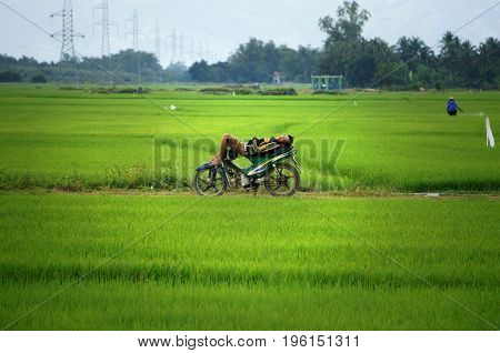 DAK LAK VIET NAM- FEB 5 2013: Asian man in deep sleep on motorbike at green paddy field when other working he lie down on motorcycle so amazing at Vietnam