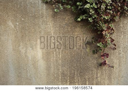 Climber on cement wall with space on the left.