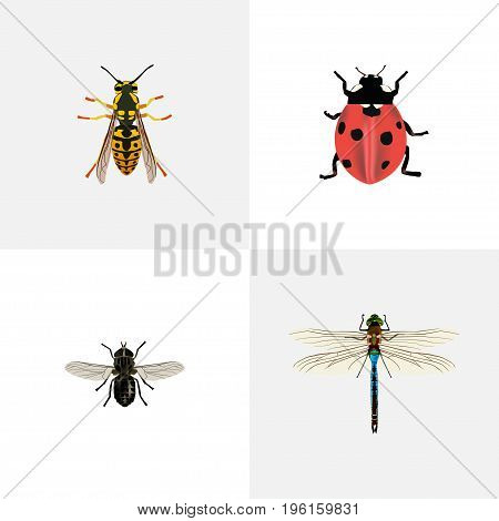 Realistic Damselfly, Ladybird, Midge And Other Vector Elements
