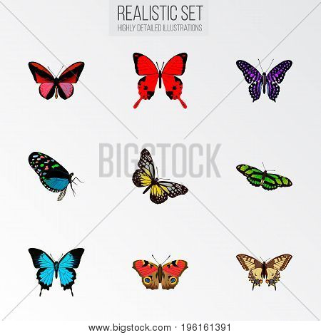 Realistic Green Peacock, Summer Insect, Sangaris And Other Vector Elements
