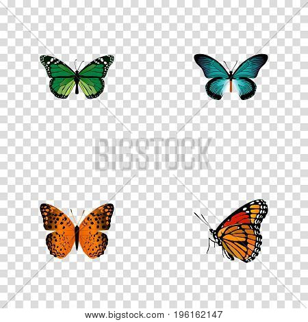 Realistic Danaus Plexippus, Pipevine, Milkweed And Other Vector Elements