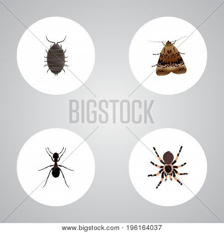 Realistic Dor, Tarantula, Butterfly And Other Vector Elements