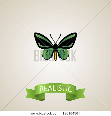 Realistic Beauty Fly Element. Vector Illustration Of Realistic Tropical Moth Isolated On Clean Background
